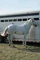 andalusian stock 2 by xbr0kendevotion