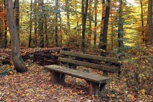 Autumn Bench by DanCioara