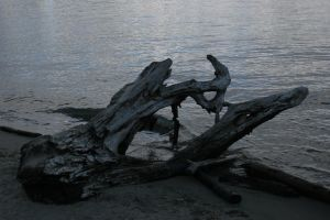 Washed Ashore by Arctictouch