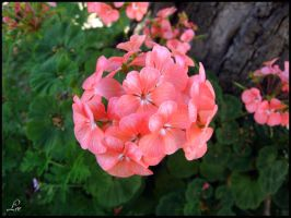 Pinkish flowes by LikaTheSheep