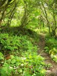 Forest Trail in IRELAND. by Mourge-stawk
