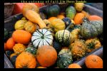Colours Of The Fall 2 by PierreTombale