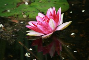little waterlily other view by ingeline-art