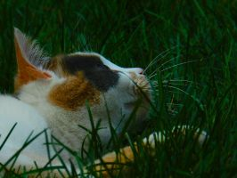 A Bed of Grass by MyLenzLife