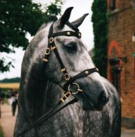 lusitano stallion by the-other1