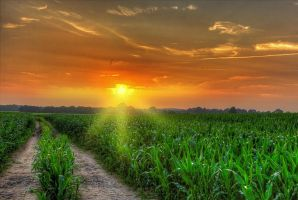 Sunset over cornfield by chevyhax