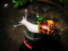 Snails love beer by Muhalovka