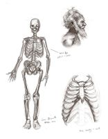 Male Anatomy: Skeleton by TabathaZee