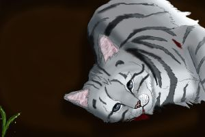 The Silver Cat has come by 10kdays