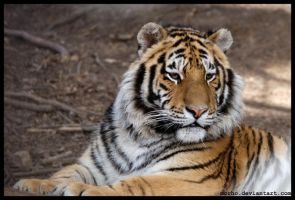 young amur by morho