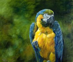 Blue Macaw by DaisyreeB