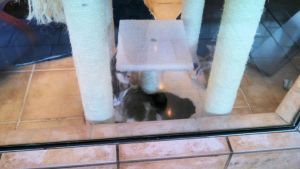 2014 The Rescue Pawtique Kittens 19 by BigMac1212