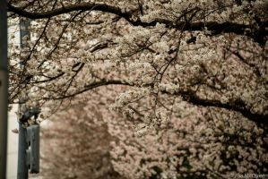 Flowering Trees by UltraSonicUSA