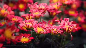 Red and yellow by samantha4