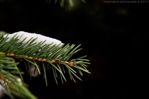 snow in the pine by bimjo