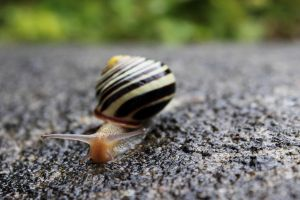 Snail In The Rain by Phy6