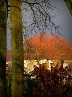 Christmas sunset colours on the garden by April-Mo