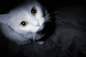 Cats eyes by Outofthisworld
