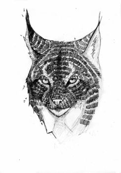 Lynx - Ink by Bluecrow10