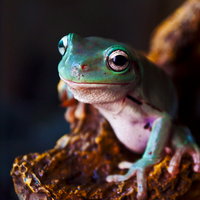 Mr Frog 03 by The-Troglodyte
