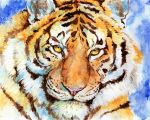 Tiger Watercolor test by COla013