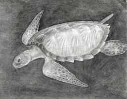 Sea Turtle by Shells124