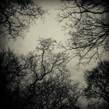 Tree Branches by TYUN