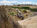 Petrified Lizard by 1Frothy
