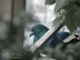 Pigeon by faithlessdream