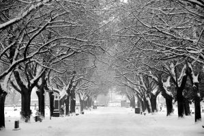 Snowy Trees AF Cemetery by houstonryan