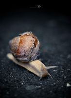 Snail by Morgo