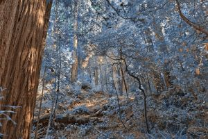 Muir Woods Scenery II - Exclusive Winter Blue HDR by somadjinn