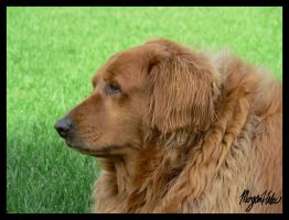 Casey Looking by MLGn00beater
