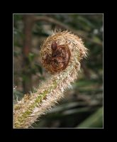 Young Frond by Rohan-Skellams