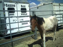 Wild Horse Captured 3 by SPEC-Nordanners