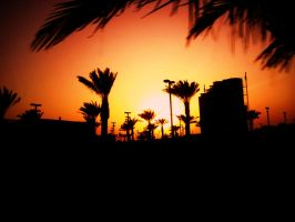 sunset and palm trees.. bliss by mihi2008
