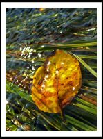 Autumn leaf in the sunny water by Eneleh