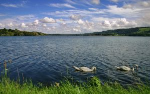 Blagdon lake swans stock by AngiWallace