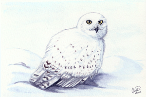 Winterbirds - Snowy Owl by twapa