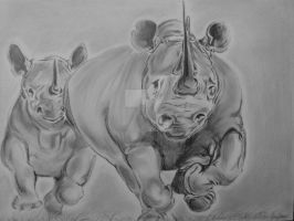 charging rhinos by chairboygazza