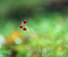 unknown berry by KariLiimatainen