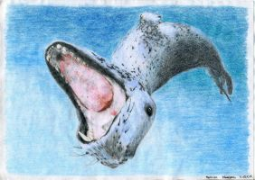 Leopard Seal by schikaka