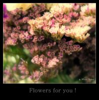 Flowers for you by florina23