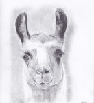 Llama Sketch by leafpoolfanXD