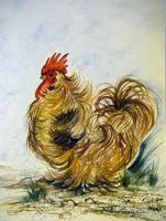 Yes I Am A Chicken by HouseofChabrier