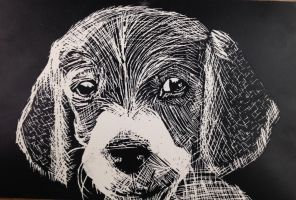 Beagle Scratchboard by HeartSketch