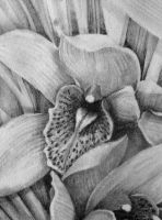 detail of Orchid by katysuebee