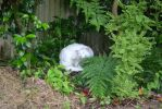 Stray Cat Outside My Room #2 by Warbear777