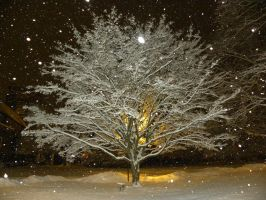 Snow coated tree by Cassini90125