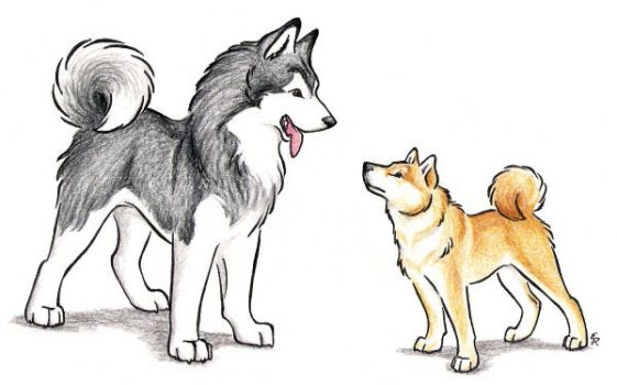 Malamute And Shiba Inu by WildSpiritWolf